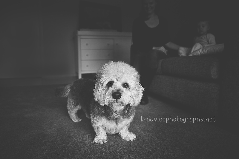 Tracy Lee Photography  I  Pet Photography